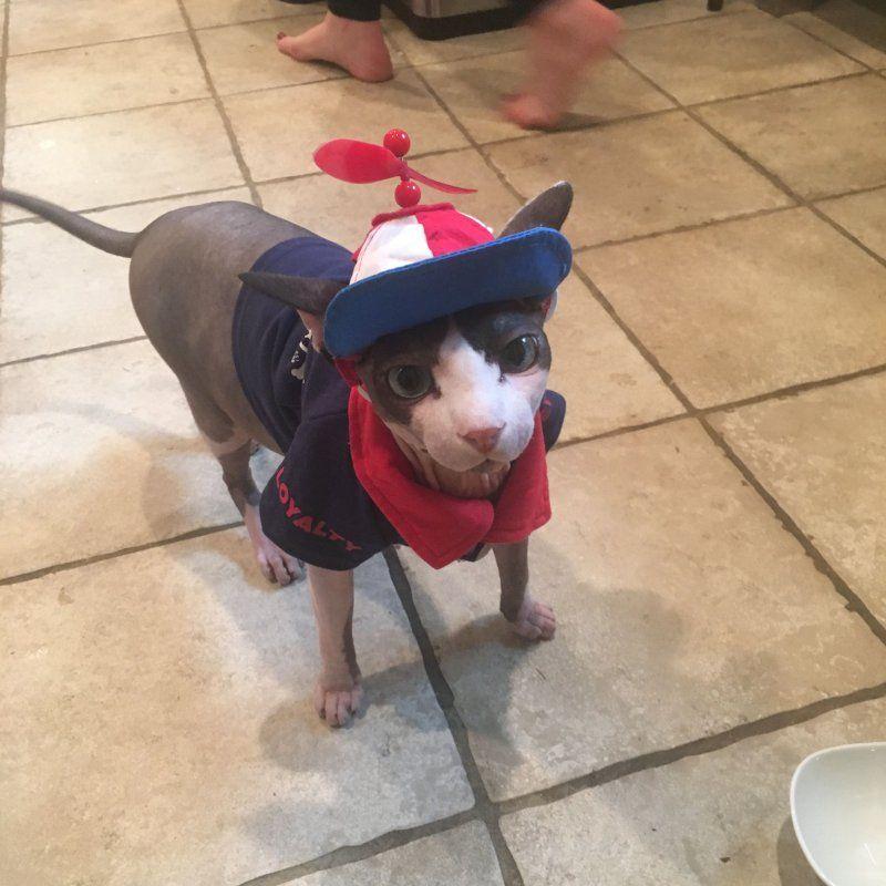 Cat Hat 1.jpg