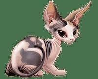 cat1fS2.png