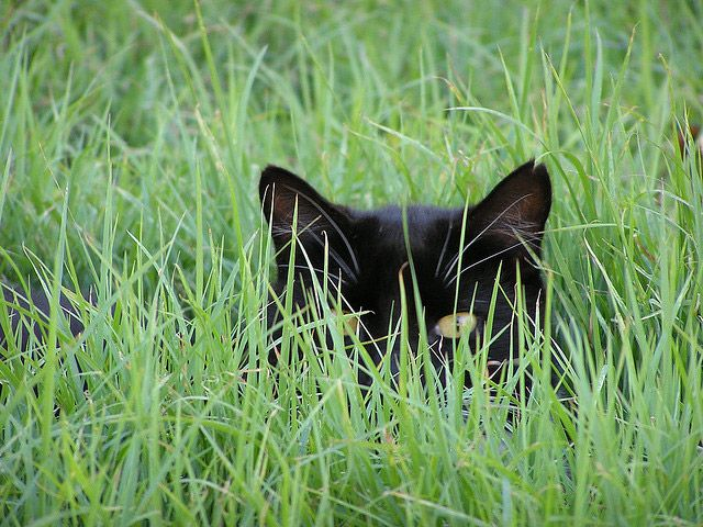 cats_hiding_4.jpg