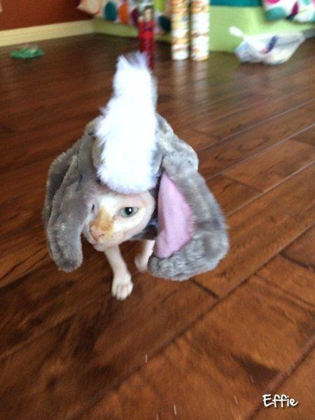 Effie.jpg