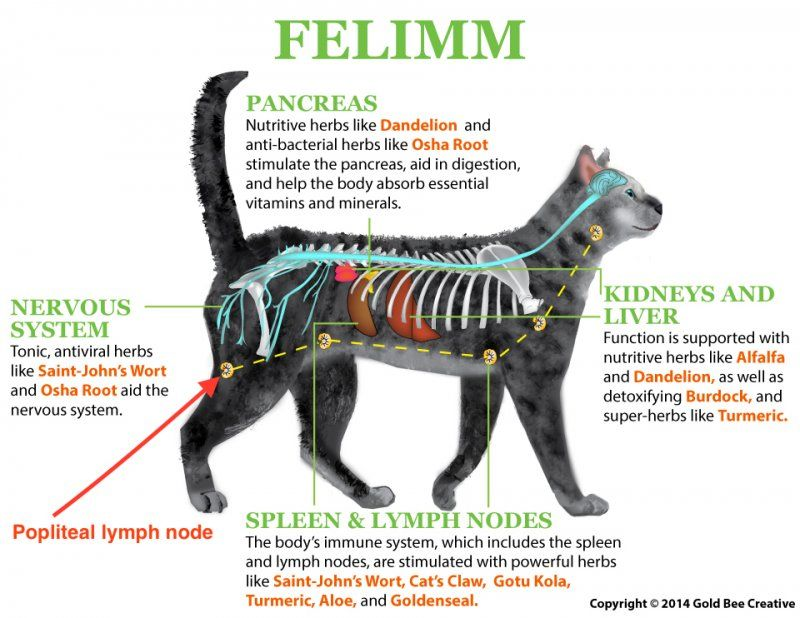Felimm_cat_diagram.jpg