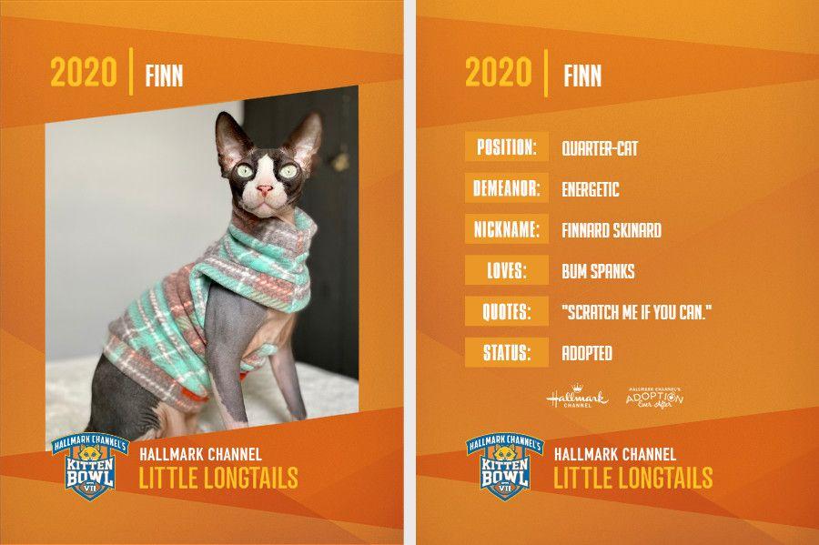 Finn Kitten Bowl.jpg