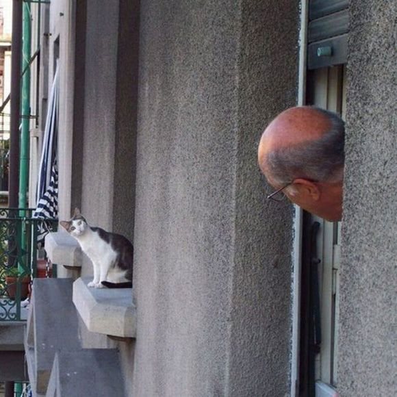 funny-cat-peeking-window-neighbor.jpg