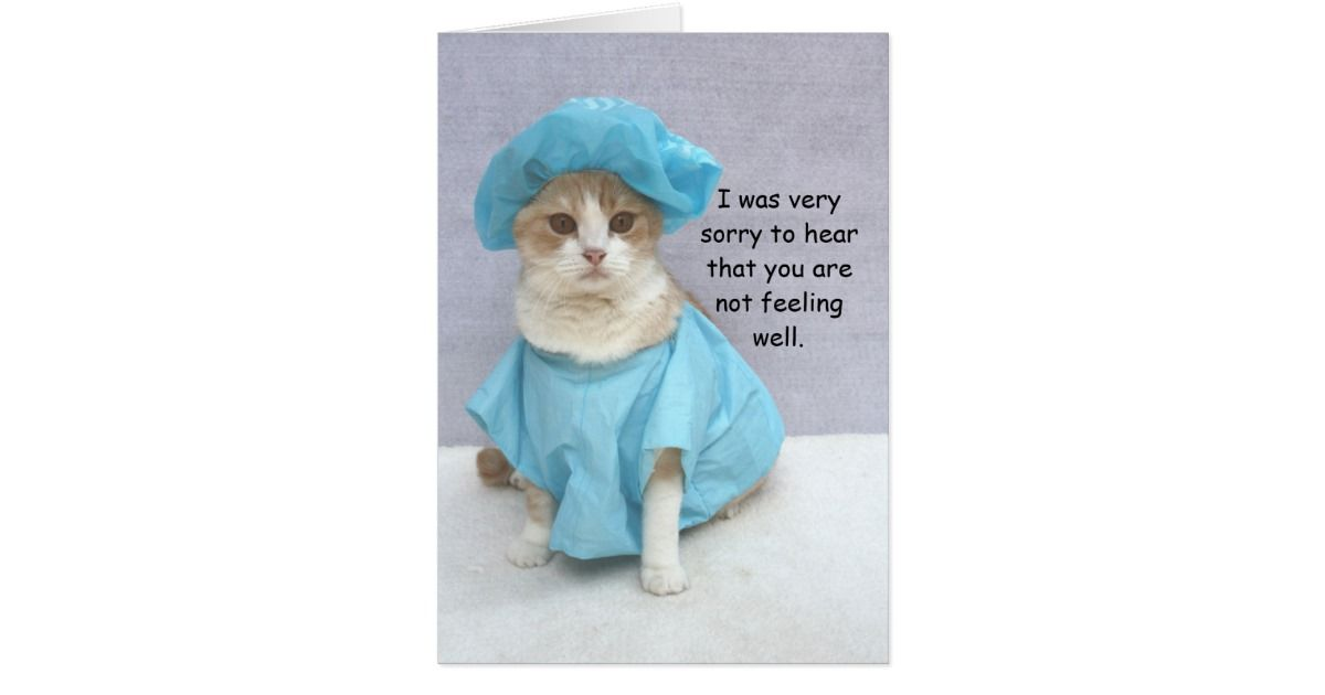 funny_cat_get_well_card-rf91006d0ec9a4515a07f637852722ad9_xvuat_8byvr_630.jpg