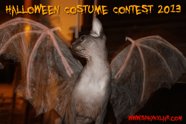 Halloween Contesst 2013.png
