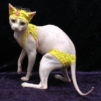 Itty bitty yellow polka dot bikini.jpg