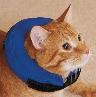 p-27435-44796-cat.jpg