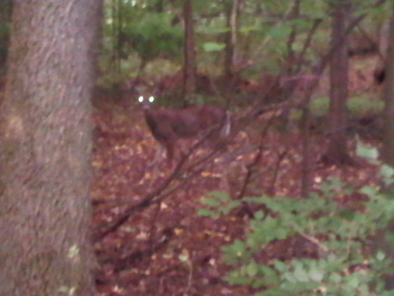 Park Pic 8 another deer.jpg