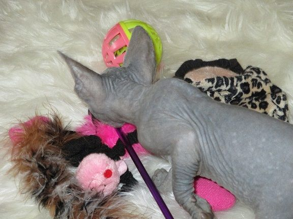 pippin with toys.jpg