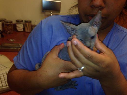 pippins first vet visit 1.jpg