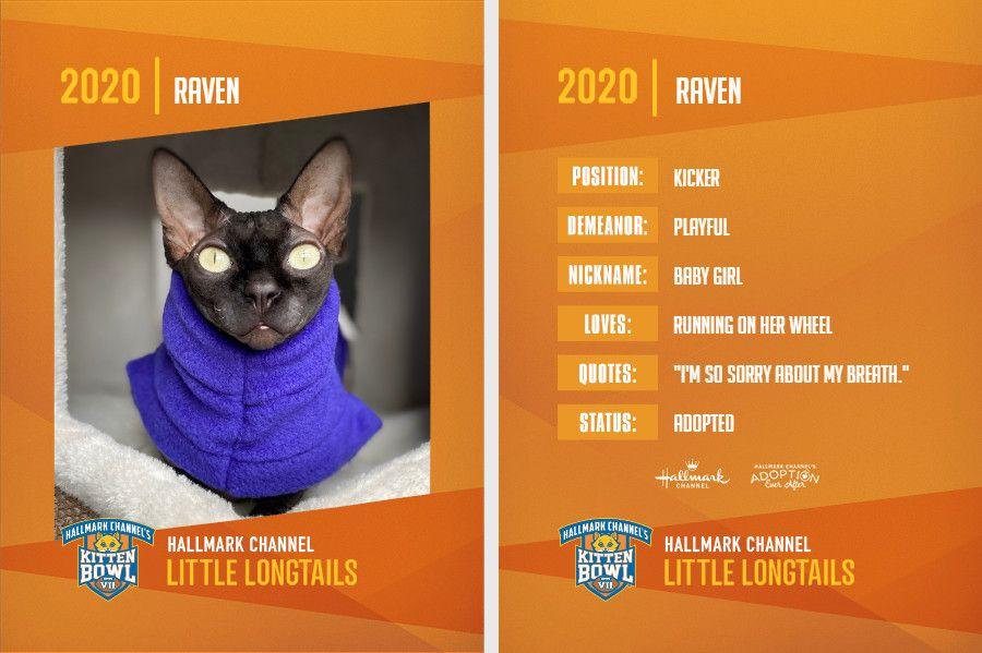 Raven Kitten Bowl.jpg