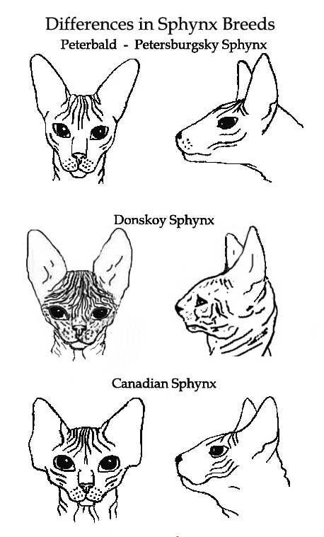 SphynxDifferences.jpg