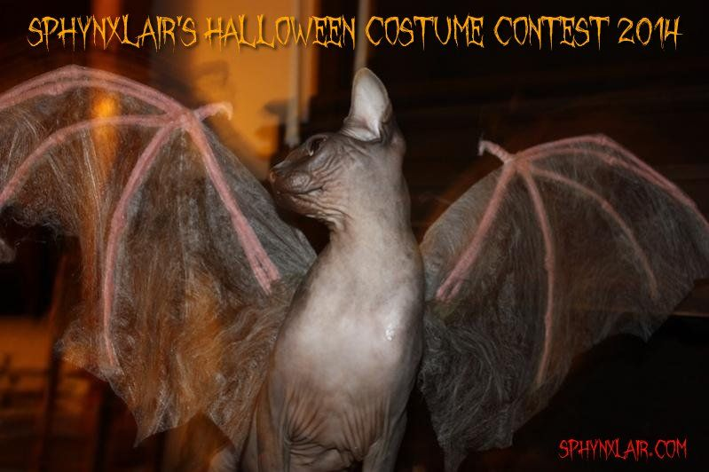 sphynxlair costume contest 2014.jpg