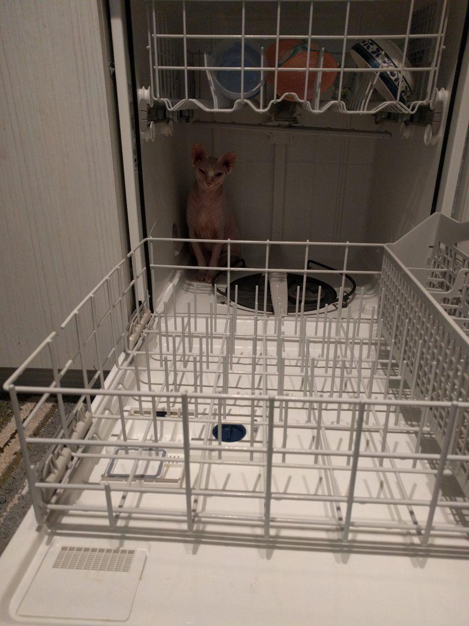 Sunday Dishwasher.jpg
