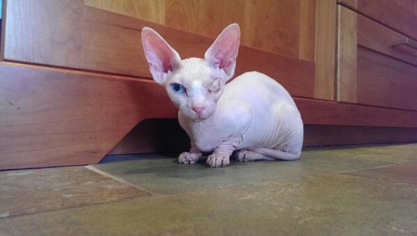 winky cat.jpg