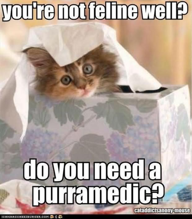 youre-not-feline-well-do-you-need-a-purramedic-cat-graphic.jpg
